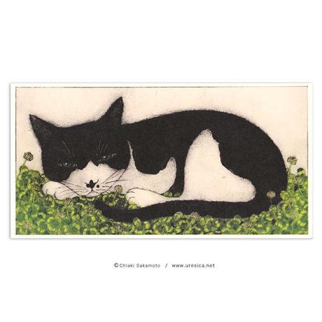 坂本千明 ポストカード(猫とシロツメクサ)