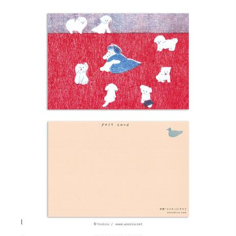 芳野 ポストカード  10枚組