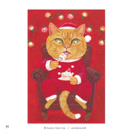 町田尚子 ポストカード(猫)