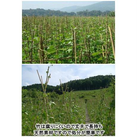 天然竹 女竹 300cm(太)5本