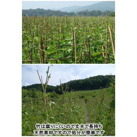 天然竹 女竹 150cm10本