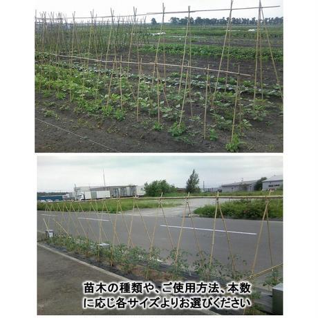 天然竹 女竹 210cm5本