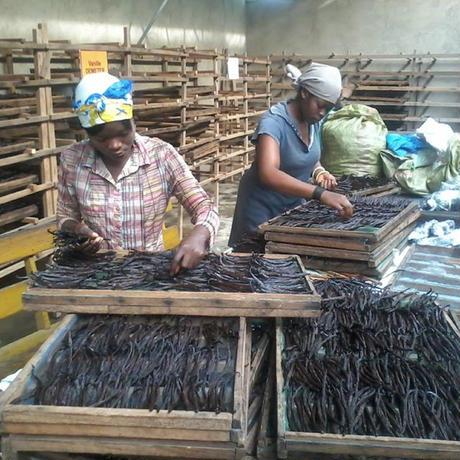 ウガンダ産「オーガニック グルメバニラビーンズ」50gボックス