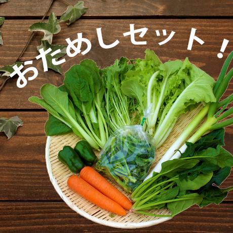 【おためし】Veggieこだわり野菜セット Sサイズ 6品目~(1~2人分)