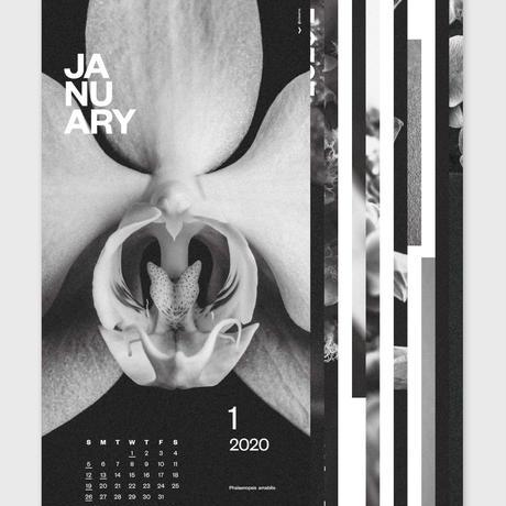 Orchid Calendar 2020