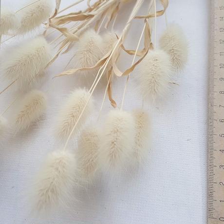 【在庫処分・送料込】ラグラスのドライフラワー(L)自然農栽培(2020産)