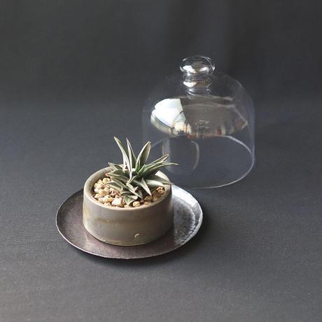 鎚目模様の黒染トレイとガラスドーム
