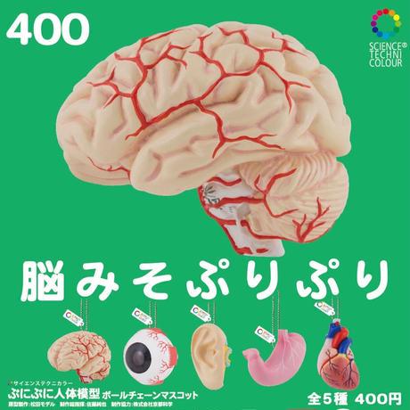 STC ぷにぷに人体模型ボールチェーンマスコット