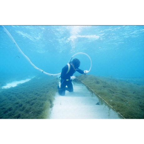 『舌はうそをつかない!』       海の蜜フコイダンハミガキ 100g