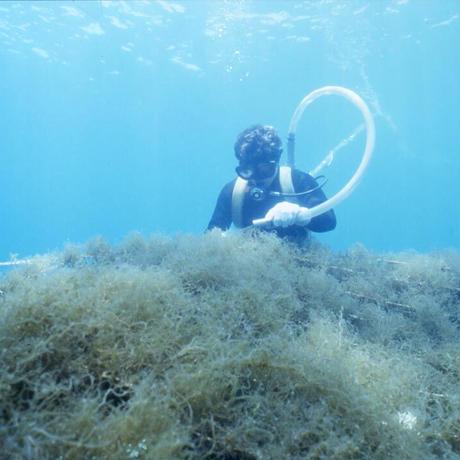 もずく洗顔石けん海の蜜  2個セット