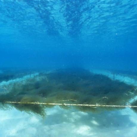 海の蜜フコイダンハミガキ 30g  お試し(トラベル携帯用)