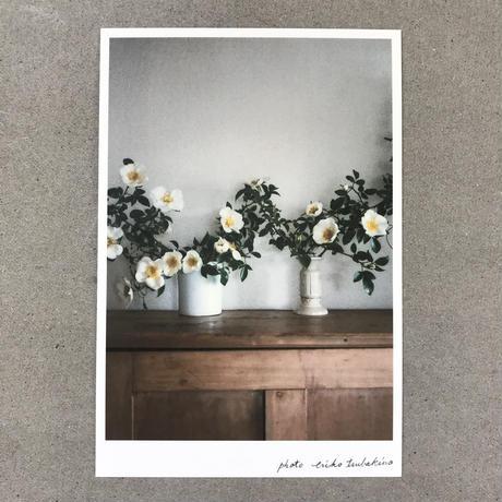 季節の葉書 白い薔薇