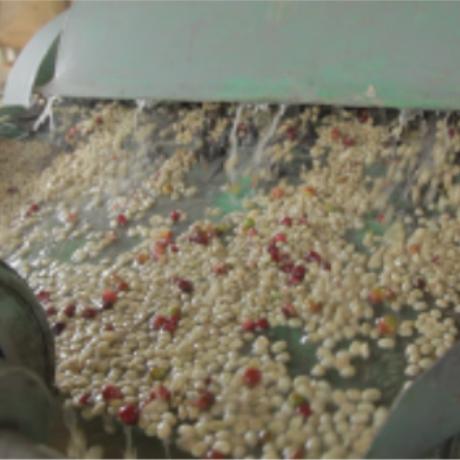 エチオピア豆のまま5kg飲食店様&企業様向けライトロースト