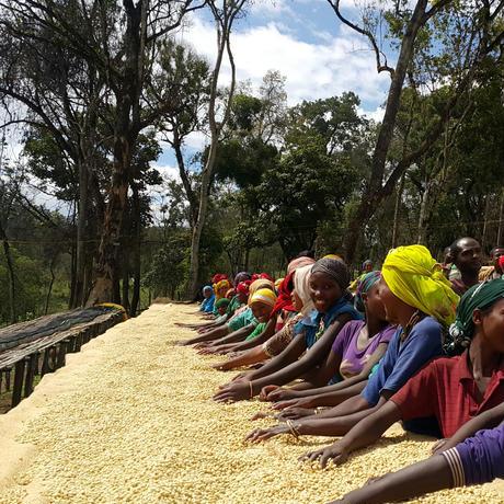 エチオピア5kg飲食店様&企業様向けライトロースト豆のまま