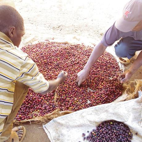 ケニア豆1kg ミディアムロースト