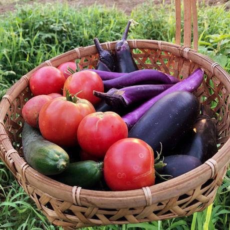 季節の野菜もりもりセット(旬の野菜の詰め合わせ)