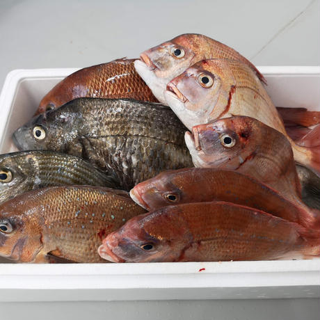 【11月下旬~12月上旬】発送分 とれたて「お魚グリル」旬のお魚