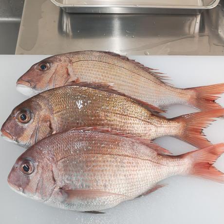 【6月14日販売】とれたて「お魚グリル」旬のお魚  6月中旬~発送