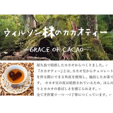 ウィルソン株の    カカオティー 2PC