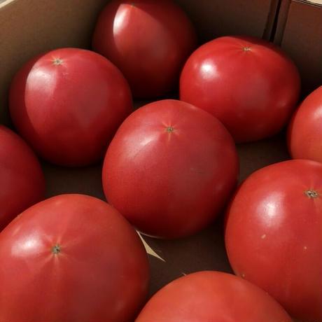 情熱トマトーLサイズ【9個入り】