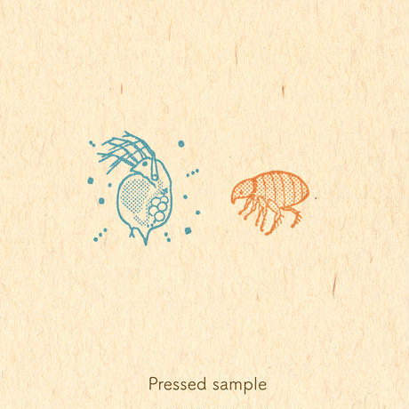 STAMP   - 神様 (ミジンコ) -