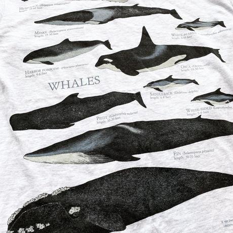 Marine Mammals Tee