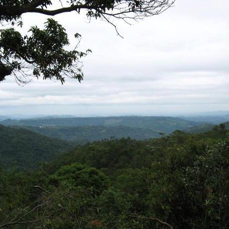 コラボ企画第1弾【単品購入】森の三兄弟(ネパール・エクアドル・メキシコ)合計450g