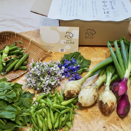 季節の野菜セットSサイズ「やさいのこばこ」
