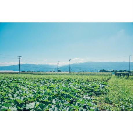 【約4.5キロ】信州伊那谷のやまとわが無農薬で栽培したにんじん