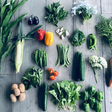 natural vegetable set / 2019.07.05 shipping