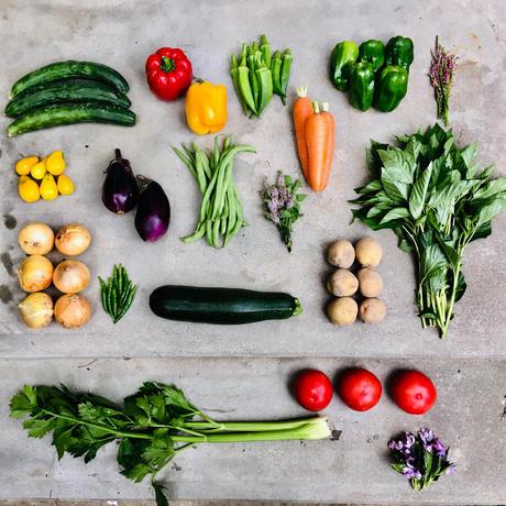 natural vegetable set / 2019.07.15 shipping