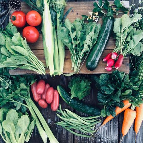 natural vegetable set / 2019.06.25 shipping