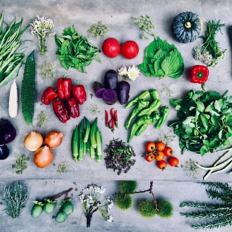 natural vegetable set 8.22 harvest&shipping