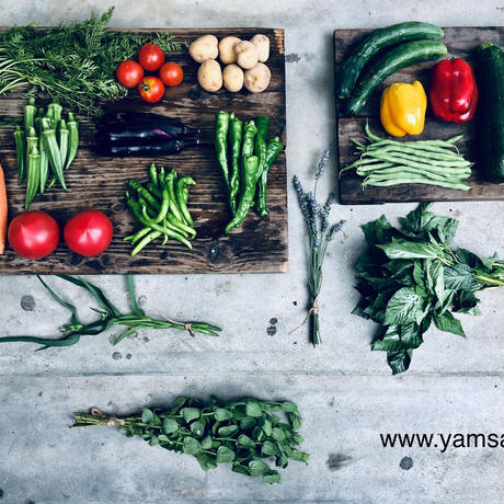 natural vegetable set / 2019.07.10 shipping