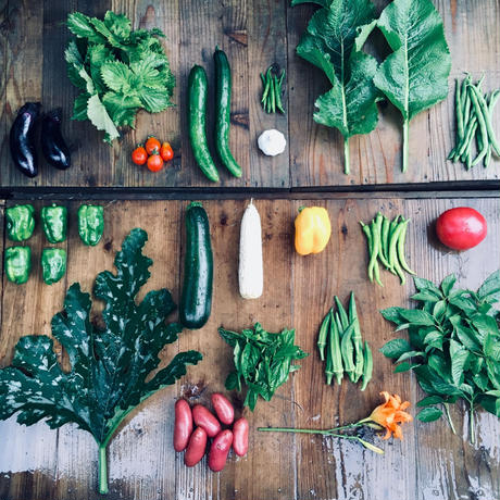 natural vegetable set / 2019.07.25 shipping