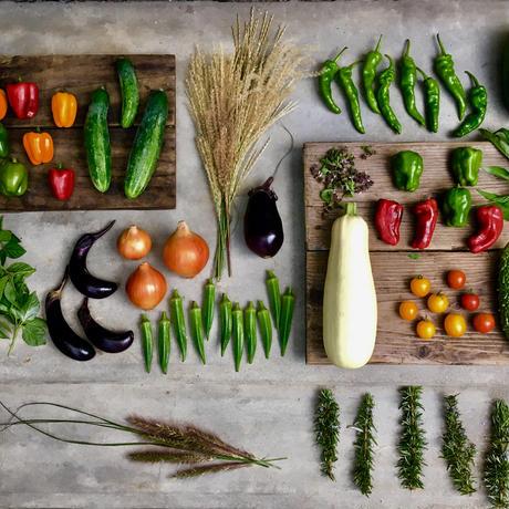 natural vegetable set 2019.09.19 harvest & shipping