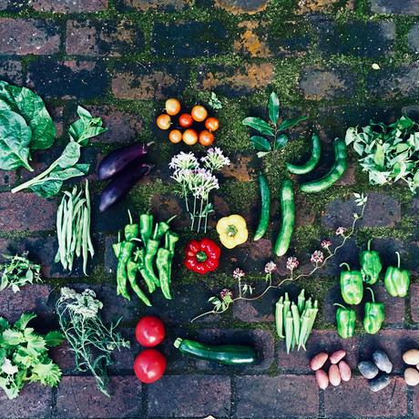 natural vegetable set / 2019.08.08 harvest & shipping