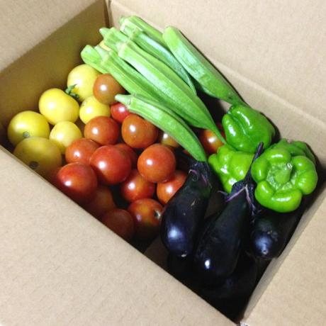 『まっつん農園の夏野菜セット』 ; 家族3〜4人用Mセット