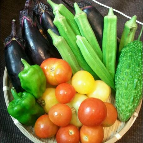 『まっつん農園の夏野菜セット』 ; 一人暮らし用Sセット