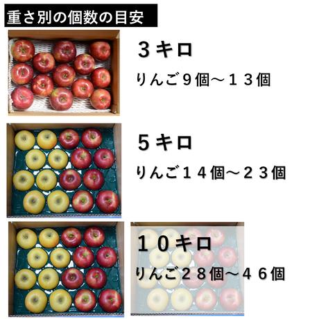 秋映3キロ
