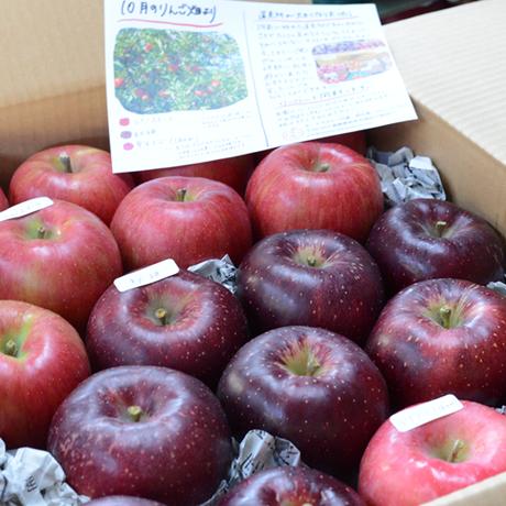 【2021年】りんご定期便5キロコース/全6回/8月~来年1月(送料込み※)
