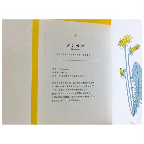 【オリジナルポストカード付】たんぽぽの秘密