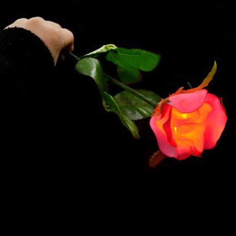 ディライト・ローズ【G0417】Lighting Rose