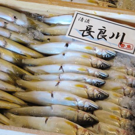 【生鮮】天然鮎 1kg / 皇室献上御料場付近