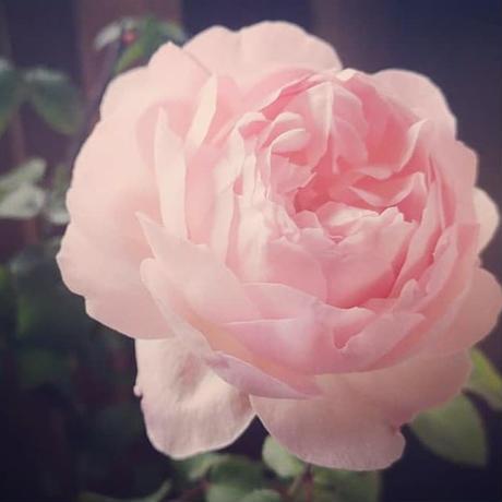 天然香水【-Ethër・Enfluerage・Tiphereth-】希少パルファンミストシリーズ