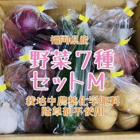 【ギフトにも】野菜7種セットM(約3,4人前分)