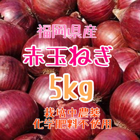 赤玉ねぎ箱込5kg.紫玉ねぎ.栽培中農薬化学肥料不使用【九州・福岡県産】