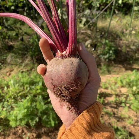 【ギフトにも】野菜4種セットS(約2人前分)