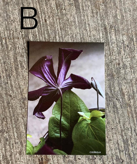 オリジナルポストカード(全7種)