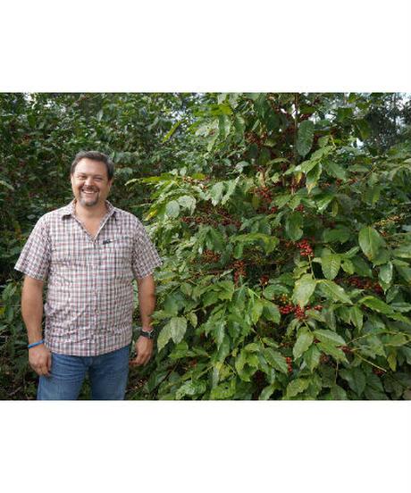 じっくり味わってほしい濃密感「リモンシージョ農園ジャバニカ」フルシティロースト100g